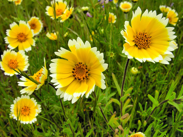 Eagle Creek State Nature Preserve to Host Wildflower Hikes on
